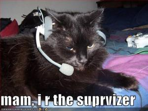 e31a5534ae69fae5_funny-pictures-call-center-cat